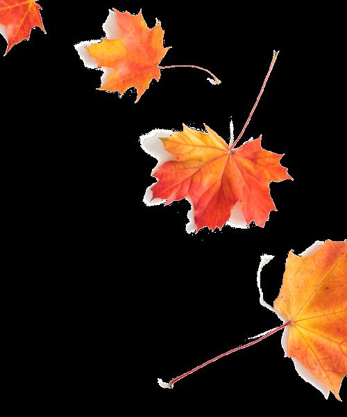 foglie autunnali di fila